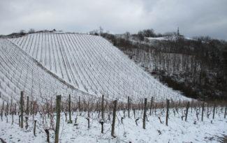 Quelques photos des Vignes
