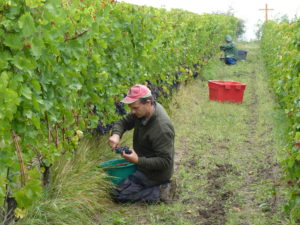 vignes vins de la madone